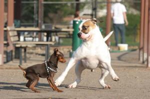 Wrigley Heights Dog Park - Long Beach California