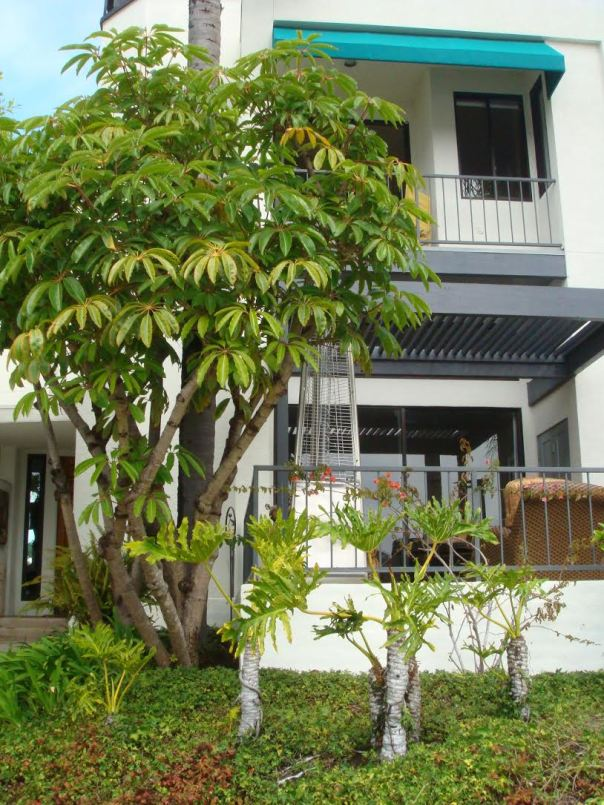 Spinnaker Cove Townhome with Boat Dock For Sale - Long Beach Luxury Real Estate- Ricardo the Realtor Top Team 562-533-4003